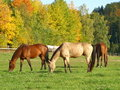 Horse pasture Stock Photography