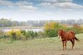 Horse on pasture autumn season Royalty Free Stock Photo