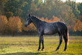 Horse photo of a beautiful dark in nature on a background plant Royalty Free Stock Image