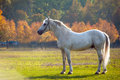 Horse photo of a beautiful white in nature on a background plant Stock Photo