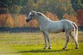 Horse photo of a beautiful white in nature on a background plant Stock Images
