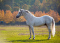 Horse photo of a beautiful white in nature on a background plant Royalty Free Stock Photos