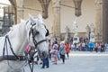 Horse in Piazza della Signoria Royalty Free Stock Photo