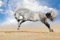 Horse play fun Royalty Free Stock Photo