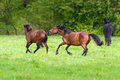 Horse play on pasture Royalty Free Stock Photo