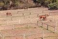 Horse Ponies Field Paddocks