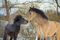 Horse and pony in love portrait Royalty Free Stock Photo