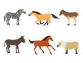 Horse pony stallion isolated different breeds color farm equestrian animal characters vector illustration.