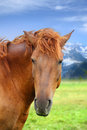 Horse portrait of a beautiful on a mountain pasture Royalty Free Stock Photography