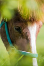 Horse portrait brown and white fur eyes with green foreground Royalty Free Stock Photo