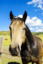 Horse portrait of a looking over a barbed wire fence Royalty Free Stock Images