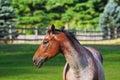Horse profile Royalty Free Stock Photo