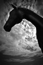 A horse profile in black and white beautiful portrait of summer Stock Images