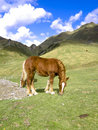 Horse at the Pyrenees Stock Photo