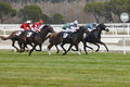 Horse race final rush. Competition sport. Hippodrome. Winner. Sp Royalty Free Stock Photo