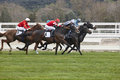 Horse race final rush. Competition sport. Hippodrome. Winner. Royalty Free Stock Photo