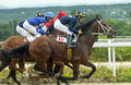 Horse race for the prize Oaks. Royalty Free Stock Photo