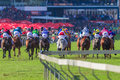 Horse racing action final straight crowds rear photo image as horses and jockeys pound the green grass towards the finish line and Royalty Free Stock Photos