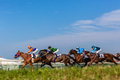 Horse racing action low grass photo angle visual image of as horses and jockeys pound the green track towards the finish line and Stock Image