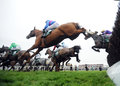 Horse racing alvarado st blue pink seen here jumping the last on the st circuit at cheltenham Stock Photography
