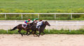 Horse racing at the hippodrome in pyatigorsk race for prize of nasima northern caucasus russia Royalty Free Stock Photo