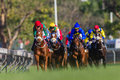 Horse racing jockeys corner low angle photo frontal image as horses and pound the green grass into last bend towards the finish Royalty Free Stock Images
