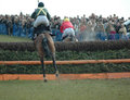 Horse racing point to point rear view of jumping a fence in front of a good crowd in the uk very popular amateur held Stock Photos