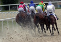 Horse racing in pyatigorsk race for the prize of the summer northern caucasus russia Stock Photography
