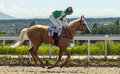 Horse racing in pyatigorsk race for the traditional prize absenta the largest russia Royalty Free Stock Photos
