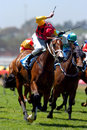 Horse racing winning Royalty Free Stock Image