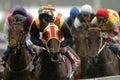 Horse racing winning Royalty Free Stock Photo
