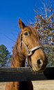 Horse at Rail Fence Royalty Free Stock Photo
