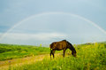 Horse with Rainbow Royalty Free Stock Photo