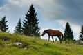 Horse in reen field in slovenian alps house green meadow mountains Stock Images