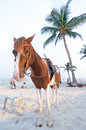 Horse for rent riding along the beach huahin beach in thailand Royalty Free Stock Photos