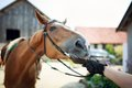 Horse rider pulls the reins Royalty Free Stock Photo