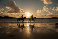 Horse riders at sunset sunse trearddur bay beach isle of anglesey north wales uk Stock Photography