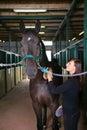 Horse riding Royalty Free Stock Photo