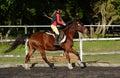 Horse riding girl child Royalty Free Stock Photo