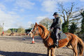 Horse riding at paddock brown with a rider Royalty Free Stock Photos