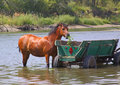 A horse is in the river Royalty Free Stock Photography