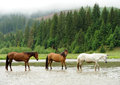 A horse in a river on background of mountains Stock Image
