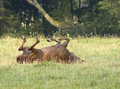 Horse rolling in field Royalty Free Stock Image