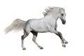 Horse run gallop Royalty Free Stock Photo