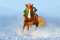 Horse run in snow. Christmas image Royalty Free Stock Photo