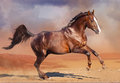 Horse running in the desert bay Royalty Free Stock Images