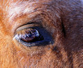 Horse's eyes Royalty Free Stock Photography