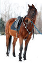 Horse saddle white snow Stock Image
