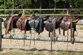 Horse saddles Royalty Free Stock Photo