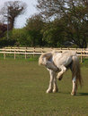Horse Scratching Royalty Free Stock Photo